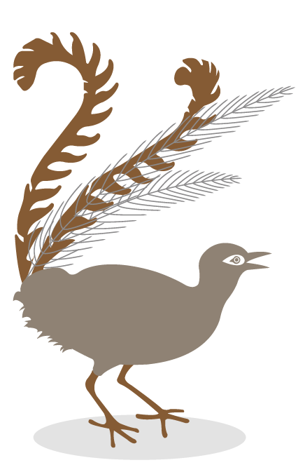 Lyrebird_for_web